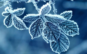 cold-winter-morning-frost-leaves