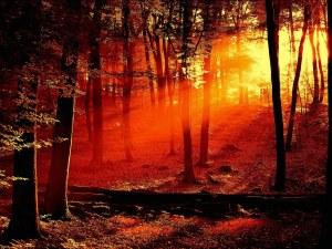beautiful-backgrounds-of-nature